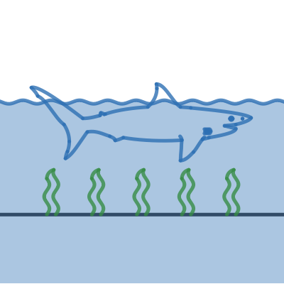 Image of Shark Graph